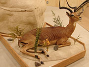 Custom Taxidermy Base and Pedestal Work - Great Bear Taxidermy