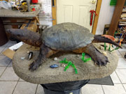 Reptile Mount - Great Bear Taxidermy