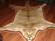 Animal Skin Rugs - Great Bear Taxidermy